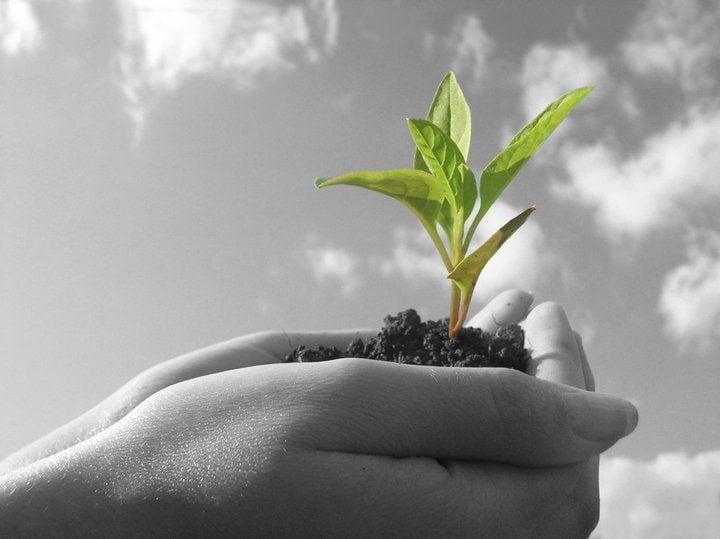 essay on tree plantation vruksharopan in hindi