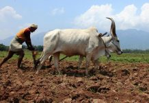 Indian farmer Essay in Hindi
